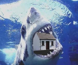 sharkbank