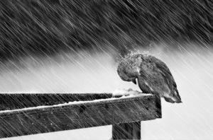 437074-Snow-storm-and-bird