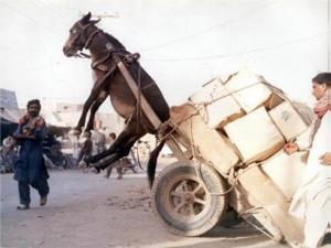 fly donkey